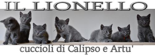 lionello